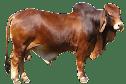 10 animals names in hindi