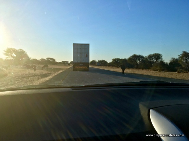 animales carretera botsuana