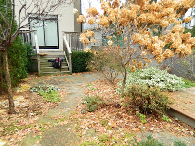 York Humewood Backyard Fall Cleanup Before by Paul Jung Gardening Services--a Toronto Gardening Company