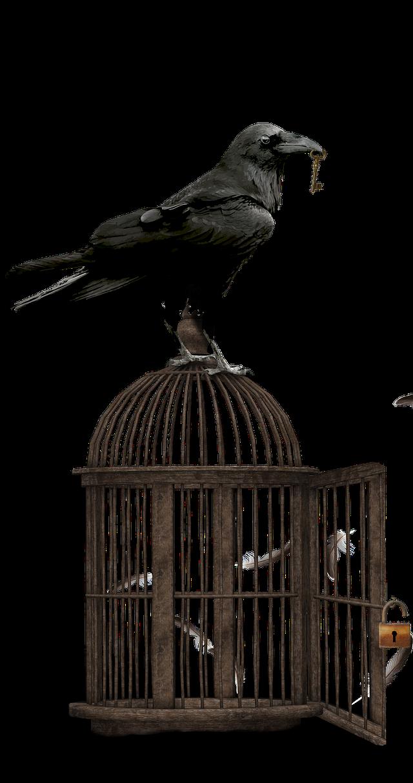 A crafty raven.