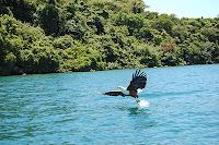 بحيرة ملاوي