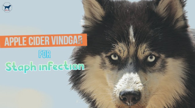 apple-cider-vinegar-for-staph-infection-in-dogs