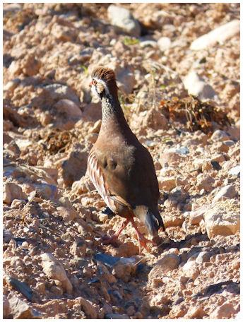 Kesäasuinen pyynaaras suojapukuisena hietikollakin huonosti erottuvana.