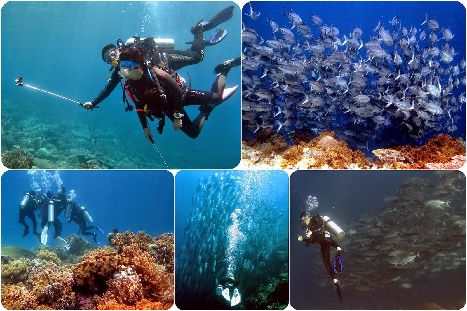 Keindahan Bawah Laut wakatobi