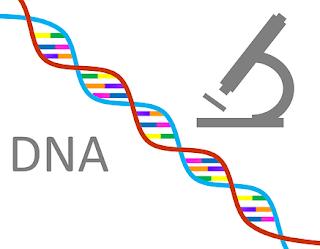 perbedaan dna rna gen dan kromosom