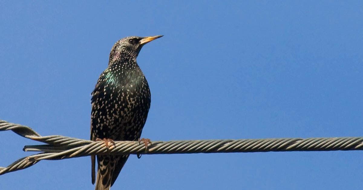 A final 10 common backyard birds in San Diego - Greg in ...