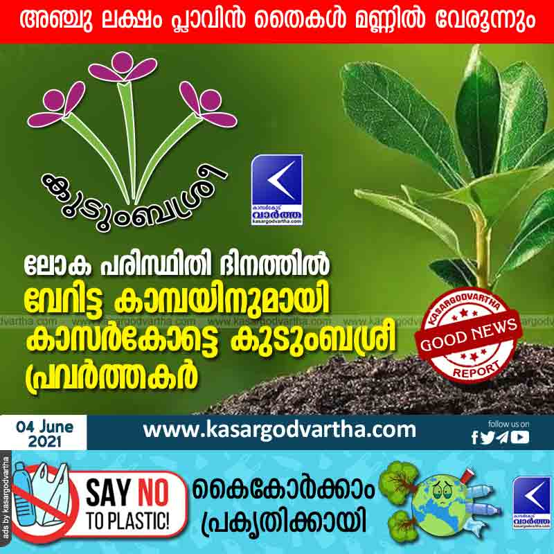 Kasargode Kudumbasree activists launch a separate campaign on World Environment Day; Five lakh seedlings to be planted