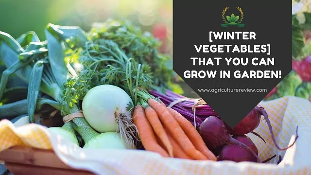 winter vegetables that you can grow by agriculture review
