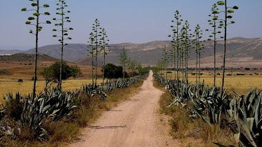Madera del desierto, los usos del Agave en una escuela-taller de Almería