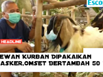 Kambing Kurban Dipakaikan Masker,Omset Menambah Drastis