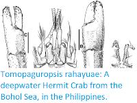 http://sciencythoughts.blogspot.co.uk/2017/06/tomopaguropsis-rahayuae-deepwater.html