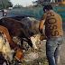 शाबाश - बेजुबान जानवरों को भोजन उपलब्ध करवा रहे हैं आशीष
