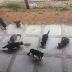 Gatos não precisam de ENEM para entrar na UFRN