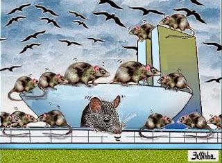 Resultado de imagem para ratos no congresso