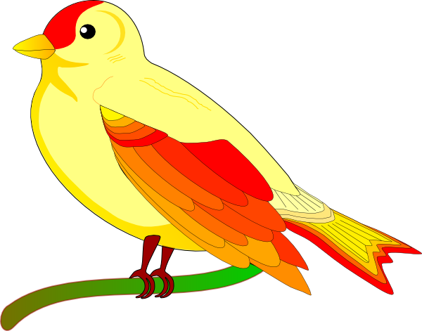 Burung Cendrawasih 1 Bliblinews Mewarnai Gambar