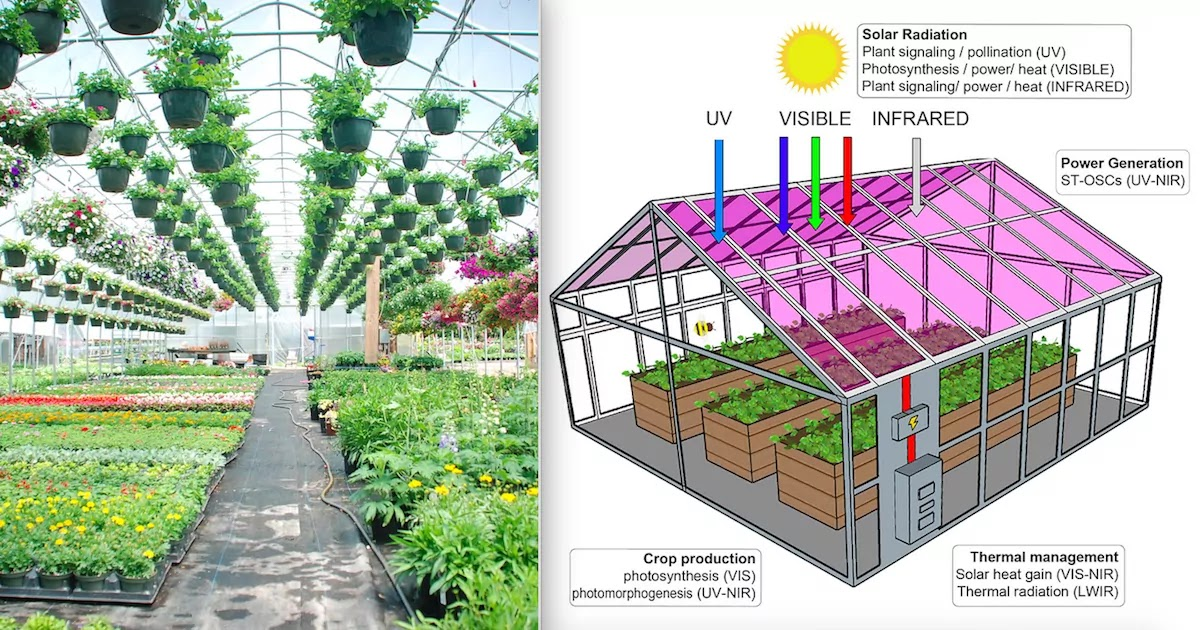New Study Shows Semi-Transparent Solar Panels Powering Greenhouses Without Compromising Plant Growth