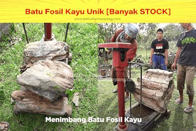 batu fosil kayu liwung