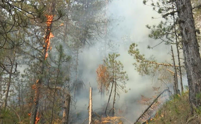 Fires in Korça and Bulqize - Pine forests are being burned!