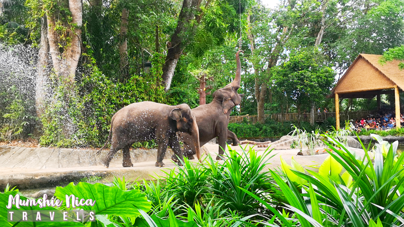 Two Elephant at Singapore Zoo showing off their skills