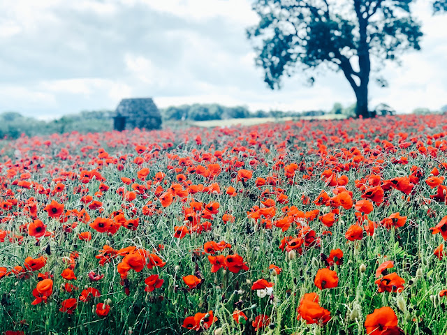 Come with me on a lazy Sunday stroll in the poppy fields of Bubnell, Baslow in the Peak District.