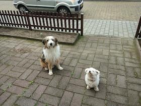 Rehabilitación: El primer escalón para la convivencia con un perro desocializado