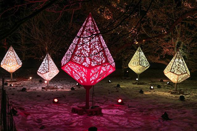 Crown of Light Display during Illumination. Image courtesy of The Morton Arboretum.