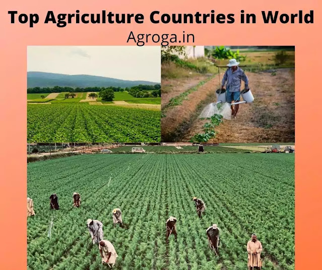 List of Top 10 Agricultural Countries In The World