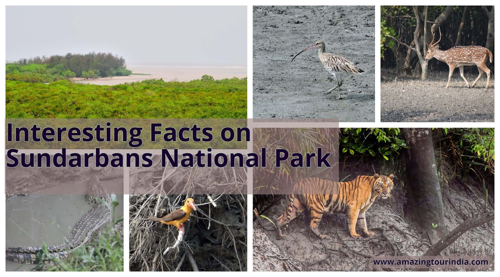 A Tourist Guide of Sundarbans National Park India- Know The Interesting Fact