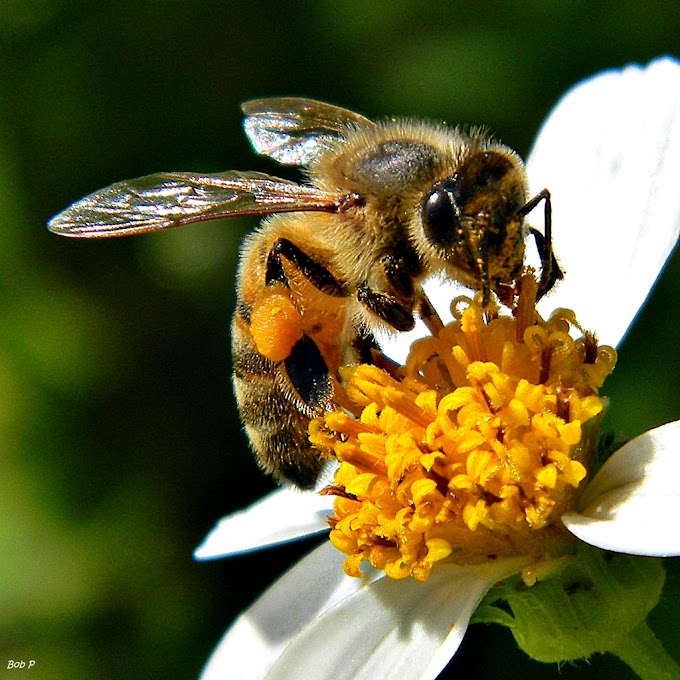 Weird Facts About Honey Bees: All Things Need To Know
