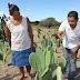 Estado oferta assistência técnica a 40 mil agricultores familiares da Bahia