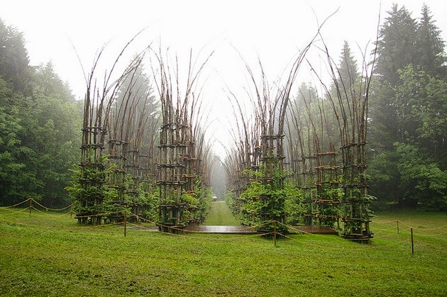 Cathedral made out of living trees-1