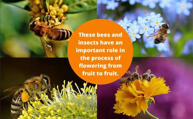 Many ways to identify honey