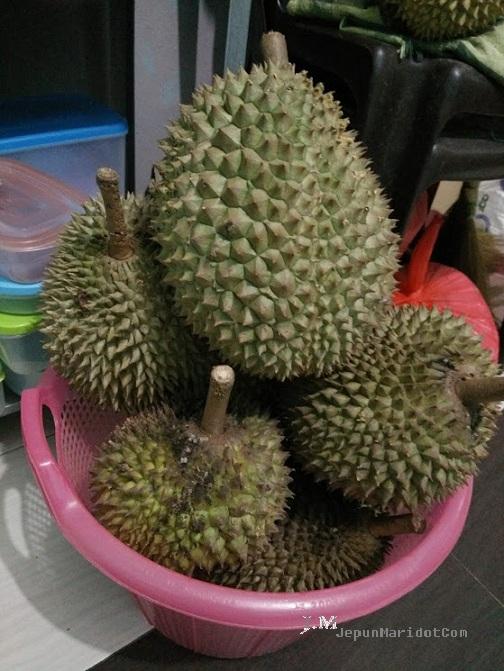Hantu durian