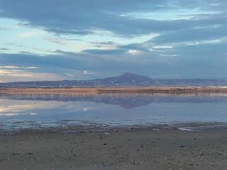 view of Larnaka Salt Lake and flamingoes