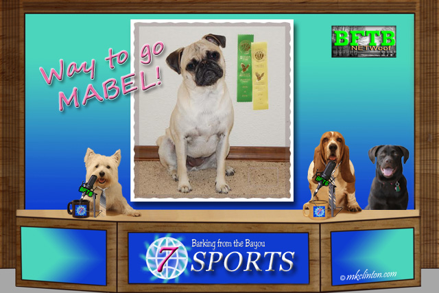 BFTB NETWoof sports with Mabel from Idaho Pug Ranch