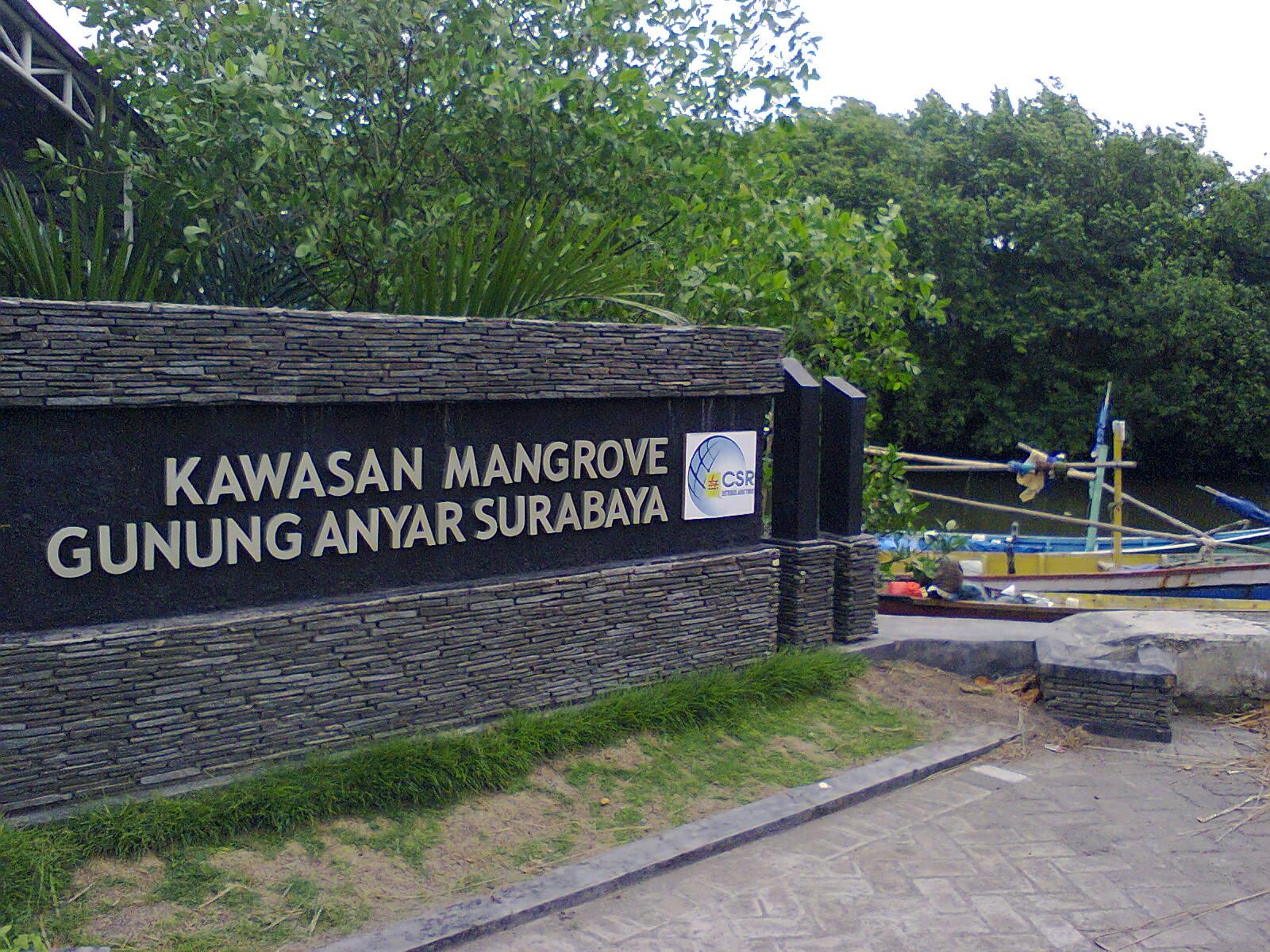 Wisata Hutan Mangrove di Jawa Timur yang Instagram-able