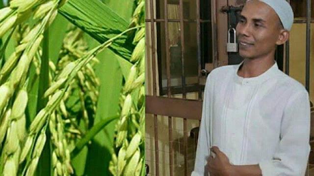 Berhasil Kembangkan Benih Padi, Kepala Desa Ini Malah Jadi Tersangka