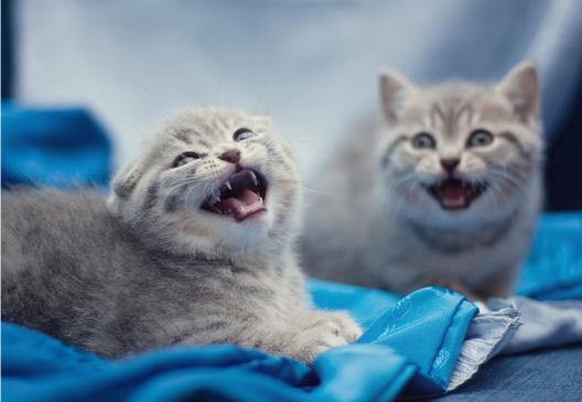 Granice hodowli kotów