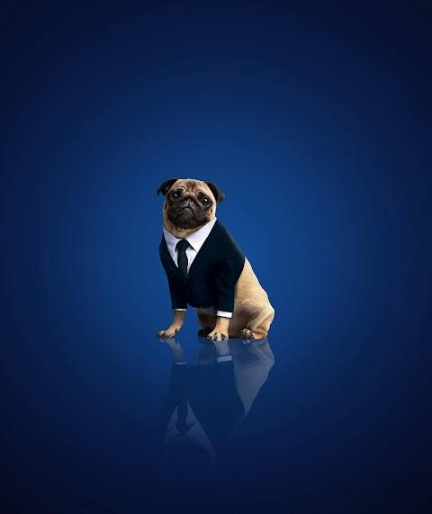 Ông Chủ Chó Pug
