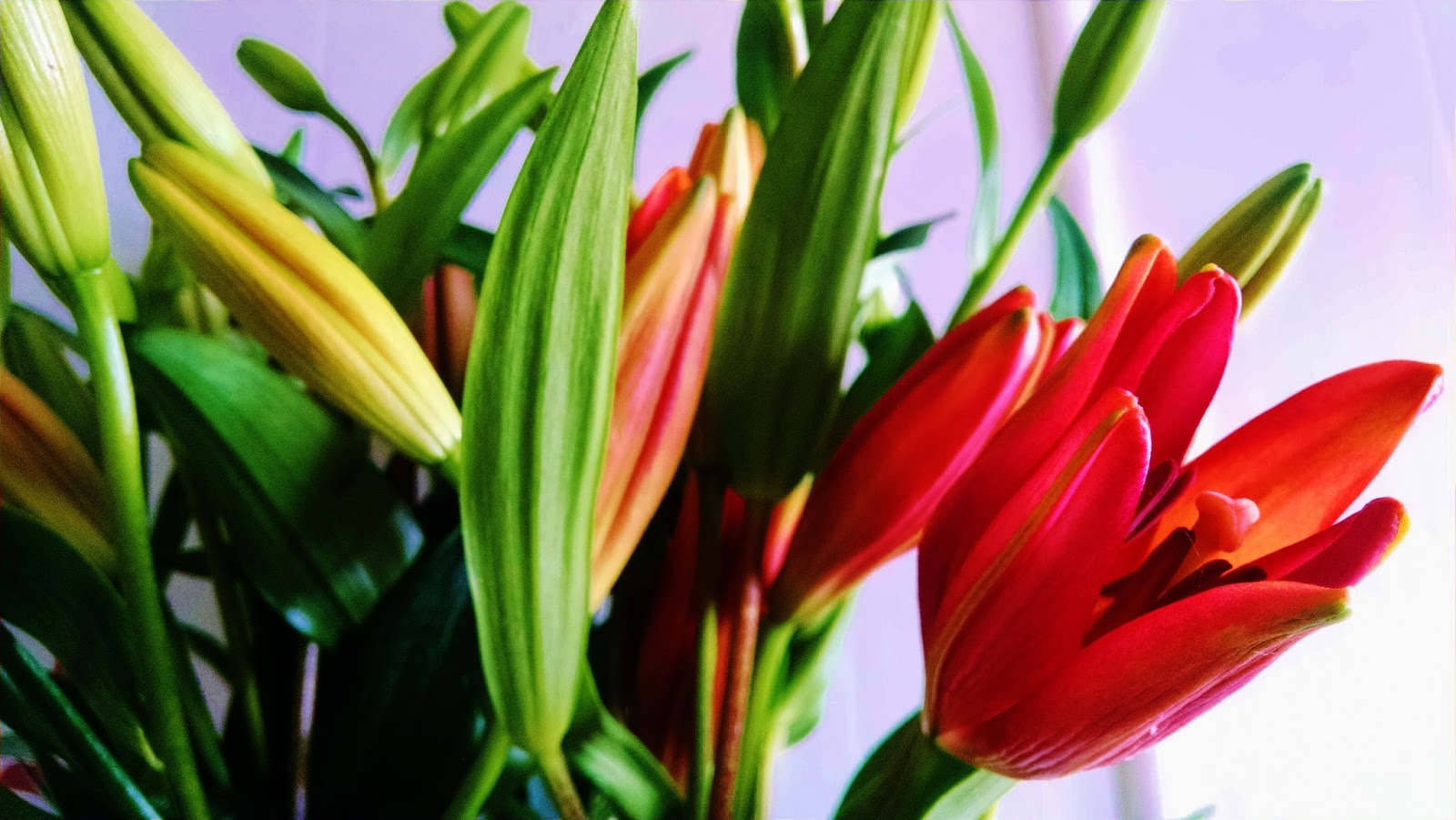 Election Recovery and Royal Sunset Lilies | Flower Talk
