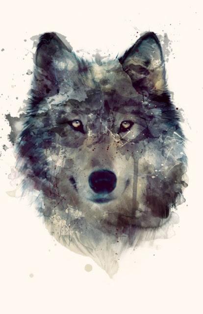 In Abruzzo non si abbattono lupi