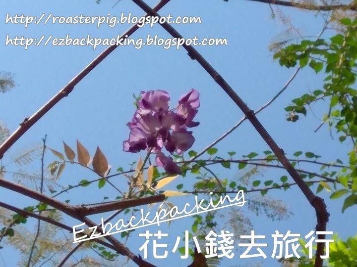 海心公園紫藤花2021