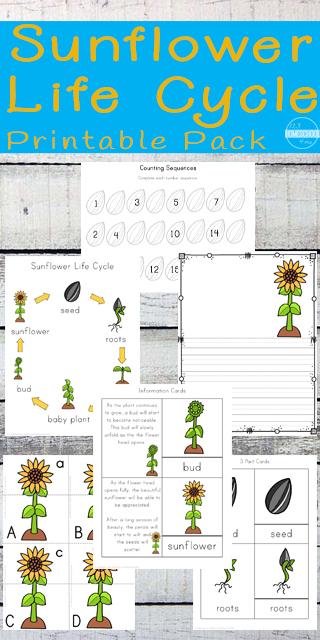 sunflower-worksheets-for-kids