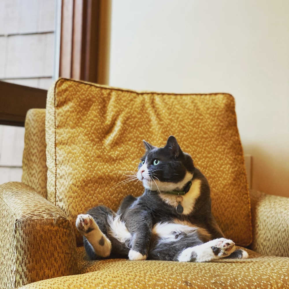 Resident cats at Alderbrook
