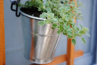 Plant growing in a silver bucket