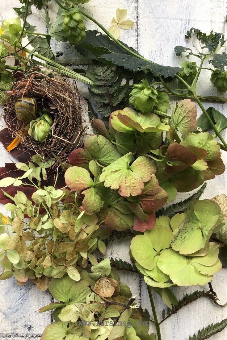 Birds nest and hydrangea flowers on barn board from www.ruralmag.com