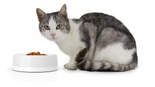 The Obe ProBowl monitors your cat's food intake and more