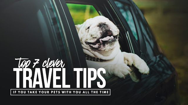 you have to be realistic and know that there are challenges when traveling with a canine. To lessen the stress and make sure you enjoy the ride, here are some tips that may come in handy.