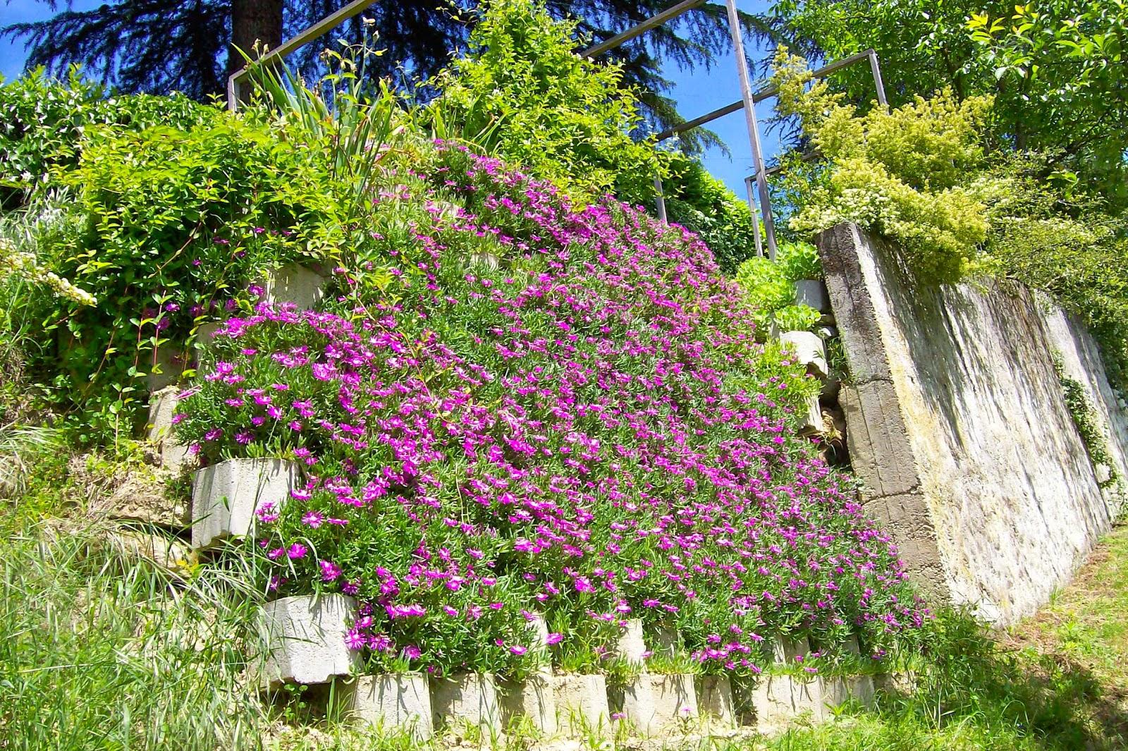 Ultimissime dall 39 orto muro fiorito for Fiori in giardino