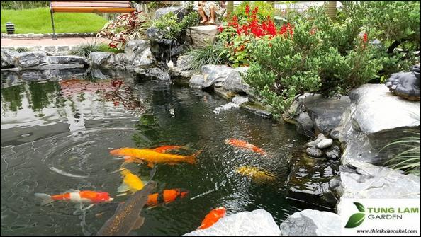 thiết kế hồ cá Koi chuẩn, TungLam Garden, thi công hồ cá Koi chuẩn